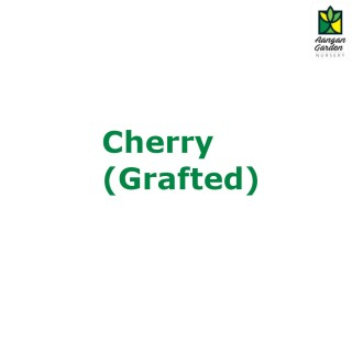 Cherry - Grafted