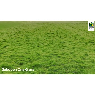 Selection One Grass